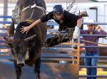 2014 NELSON COUNTY FAIR: Bull riding