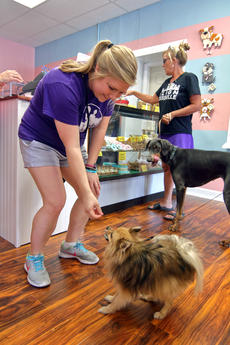 "<div class=""source"">KACIE GOODE/The Kentucky Standard</div><div class=""image-desc"">Chelsea Ryan gives Turbo a treat Friday morning during the grand opening of Just Barked an all-dog spin off of Ryan's Just Baked Bakery.</div><div class=""buy-pic""><a href=""/photo_select/88743"">Buy this photo</a></div>"