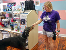 "<div class=""source"">KACIE GOODE/The Kentucky Standard</div><div class=""image-desc"">Chelsea Ryan gives Bella a treat Friday morning during the grand opening of Just Barked an all-dog spin off of Ryan's Just Baked Bakery.</div><div class=""buy-pic""><a href=""/photo_select/88746"">Buy this photo</a></div>"