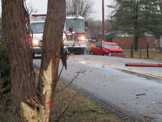 """<div class=""""source"""">TOM ISAAC/PLG News</div><div class=""""image-desc"""">A car hit the tree pictured at left on Samuels Loop in Cox's Creek the morning of March 9. The driver, Wendy Jane Kilgour, died of blunt force trauma injuries.</div><div class=""""buy-pic""""><a href=""""/photo_select/24184"""">Buy this photo</a></div>"""