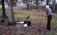 "<div class=""source"">ERIN L. MCCOY/The Kentucky Standard </div><div class=""image-desc"">Charles Minor throws feed to wild turkeys and a rooster that set up camp in his front yard last week. Being a member helps Charles and his wife, Bernice, stay in their house, where Charles can keep up his hobbies, like woodworking and renovating their home. </div><div class=""buy-pic""><a href=""http://web2.lcni5.com/cgi-bin/c2newbuyphoto.cgi?pub=191&orig=IMG_4682.JPG"" target=""_new"">Buy this photo</a></div>"