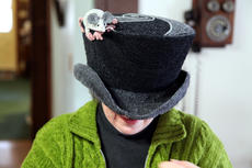 """<div class=""""source"""">SPENCER JENKINS/The Kentucky Standard</div><div class=""""image-desc"""">Justine Dennis models a wedding top hat with a mouse on top. She made the hat for her husband for a wedding they attended.</div><div class=""""buy-pic""""><a href=""""/photo_select/44479"""">Buy this photo</a></div>"""