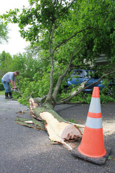 "<div class=""source"">ERIN L. MCCOY/The Kentucky Standard</div><div class=""image-desc"">City Groundskeeper Phillip Grubbs cuts apart a large branch that fell on a car at 603 Pulliam Ave. in Henrytown during storms early Tuesday morning.</div><div class=""buy-pic""><a href=""http://web2.lcni5.com/cgi-bin/c2newbuyphoto.cgi?pub=191&orig=TreeDown0426.JPG"" target=""_new"">Buy this photo</a></div>"