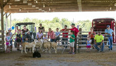"<div class=""source"">KACIE GOODE/The Kentucky Standard</div><div class=""image-desc"">Alan Miller leads a herding demonstration Saturday for Ag Day at the Nelson County fairgrounds.</div><div class=""buy-pic""><a href=""/photo_select/87420"">Buy this photo</a></div>"