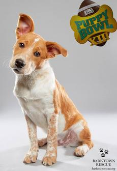 "<div class=""source"">Submitted Photo</div><div class=""image-desc"">Woody, aka ""Buck"", is one of two local puppies to be featured on Animal Planet's Puppy Bowl XIII. The Super Bowl spoof airs 2 p.m. Feb. 5.</div><div class=""buy-pic""></div>"