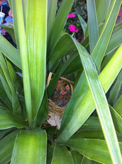 A photo taken by Rob Tirollo  received runner-up honors in the contest. In the photograph, a nest of baby birds can be seen in a patio planter at his mother-in-laws home. He and his wife, Lauren Crume Tirollo, of Fort Meyers, were in Bardstown visiting. The baby birds left the day after the Tirollos returned to Florida.