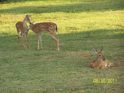 Picture taken in the backyard of the photographer's home on Rosewood Drive, Bardstown.
