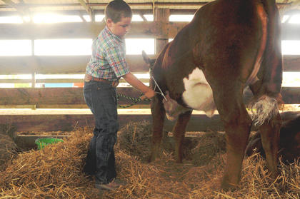 Ryan Underwood, 9, Campbellsville, brushes his Nov. 30 calf, Peaches, before the beef show judging at the Nelson County Fair.