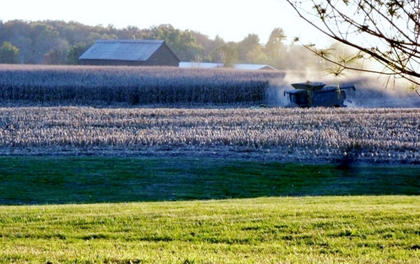 A combine with lots of dust in a corn field on Hunters lane. Taken by Patsy McGee
