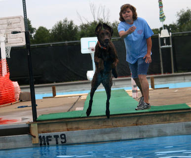 A Lab named Montana jumps into the pool after a toy thrown by handler Penny Spalding during Dippin' Dogs Saturday at the Bardstown City Pool.