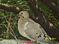 Tara Buster, Bardstown, took this photo of a dove at the Louisville Zoo.