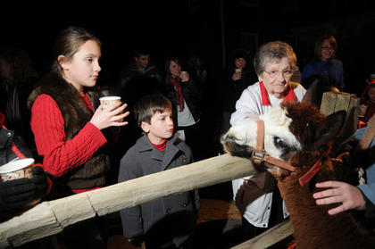 Alma Dizdar, Omar Dizdar and Anna Brown get a close-up look at an alpaca at the living Nativity scene at Bardstown Baptist Church Friday.