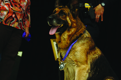 Figo wears a medal that was awarded to him at the Not So Silent Auction and Best Dressed Dog Review Friday.