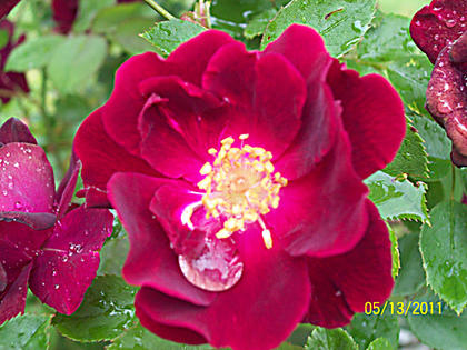 Tara Buster, Bardstown, took this photo of a flower at her grandmother's house in Clermont.