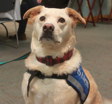 "<div class=""source""></div><div class=""image-desc"">Baron, an HMH volunteer pet therapy dog, attended the HMH Foundation Board Meeting as part of a Pet Therapy presentation. Following the presentation, the Hardin Memorial Health (HMH) Foundation approved a $32,500 request to establish a pet therapy program at HMH called Providing Unconditional Patient Support or P.U.P.S.</div><div class=""buy-pic""><a href=""/photo_select/99587"">Buy this photo</a></div>"