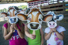 """<div class=""""source"""">KACIE GOODE/The Kentucky Standard</div><div class=""""image-desc"""">Emmy Lou Crepps, Kendall Russell and Josie Crepps pose with their cow faces Saturday while enjoying Ag Day at the fairgrounds.</div><div class=""""buy-pic""""><a href=""""/photo_select/87406"""">Buy this photo</a></div>"""