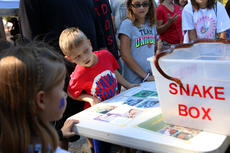 """<div class=""""source"""">KACIE GOODE/The Kentucky Standard</div><div class=""""image-desc"""">Live animals capture the attention of kids at Bernheim ColorFest's discovery stations.</div><div class=""""buy-pic""""><a href=""""/photo_select/80418"""">Buy this photo</a></div>"""
