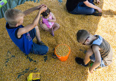 """<div class=""""source"""">KACIE GOODE/The Kentucky Standard</div><div class=""""image-desc"""">Trace, Dayne and Mollie Hamilton play in the corn pit while attending Ag Day at the Nelson County fairgrounds Saturday.</div><div class=""""buy-pic""""><a href=""""/photo_select/87411"""">Buy this photo</a></div>"""