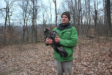 "<div class=""source"">Submitted Photo</div><div class=""image-desc"">Forest Manager Andrew Berry holds a female golden eagle just before its release. Bernheim is tracking a pair of golden eagles and recently announced ""Athena"" as the name of the female.</div><div class=""buy-pic""></div>"