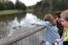 """<div class=""""source"""">KACIE GOODE/The Kentucky Standard</div><div class=""""image-desc"""">Kids watch as geese swim near a platform at Bernheim Forest. Despite the gloomy weather, some still attended spring break activities that are being hosted by the forest this week, including a daily guided walk beginning at 2 p.m.</div><div class=""""buy-pic""""><a href=""""/photo_select/84603"""">Buy this photo</a></div>"""