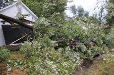 """<div class=""""source"""">RANDY PATRICK/The Kentucky Standard</div><div class=""""image-desc"""">Two sections of a big tree trunk and branches fell on a house and cars at 1401 E. Halstead Ave. Tuesday.</div><div class=""""buy-pic""""></div>"""