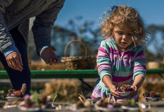 "<div class=""source"">KACIE GOODE/The Kentucky Standard</div><div class=""image-desc"">3-year-old Lyla finds the perfect place to sit her mudpie Sunday during Bernheim&#039;s ColorFest.</div><div class=""buy-pic""></div>"