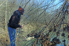 """<div class=""""source"""">KACIE GOODE/The Kentucky Standard</div><div class=""""image-desc"""">Buffalo firefighter Craig Wright leans in for a closer look at something on the riverbank Thursday. Wright, along with several other volunteers, made up two search parties who canvassed the river from Howardstown to New Haven for any sign of Michael Key.</div><div class=""""buy-pic""""><a href=""""/photo_select/72490"""">Buy this photo</a></div>"""
