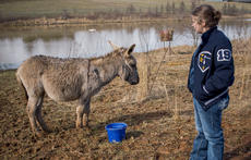"""<div class=""""source"""">File Photo</div><div class=""""image-desc"""">Thomas Nelson FFA students are caring for a donkey and goats, but hope to expand their livestock and crops trough a grant.</div><div class=""""buy-pic""""></div>"""