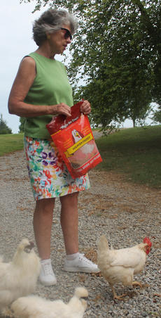 "<div class=""source"">RANDY PATRICK/The Kentucky Standard</div><div class=""image-desc"">Pat Swartz feeds her chickens meal worm treats.</div><div class=""buy-pic""><a href=""/photo_select/88514"">Buy this photo</a></div>"