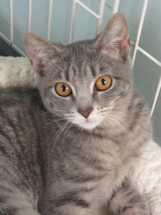"<div class=""source""></div><div class=""image-desc"">Wanda is a wonderful grey Tabby cat. She is a soft grey with big gold eyes. Wanda is 3 months old and a real lover. If there are other cats in your house that&#039;s just fine with this kitten.</div><div class=""buy-pic""><a href=""/photo_select/69219"">Buy this photo</a></div>"
