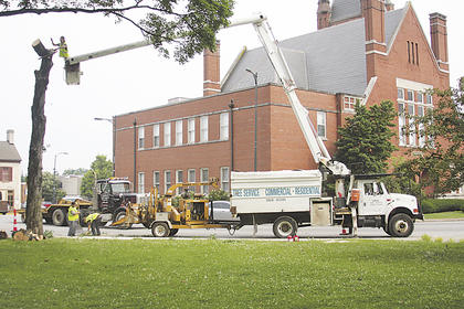 JUNE 2010: Crews work to remove trees on the south end of the Old Courthouse as part of the Streetscape project. Although the original plan was altered to preserve more trees, construction on a waterline has necessitated the removal of some downtown foliage because it will likely damage the plant's roots. (Published June 4, 2010.)
