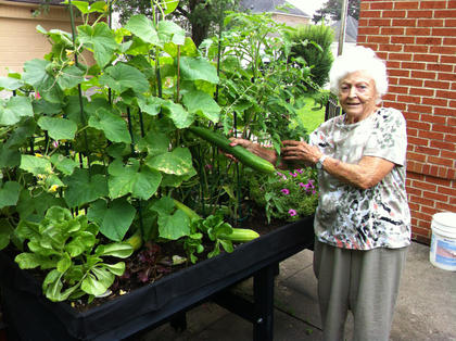 "Mary Blanford grew these huge cucumbers along with her tomatoes, green beans, three different kinds of lettuce, herbs and flowers and more on her back patio at her residence in downtown Bardstown. Blanford welcomes anyone who would like to ""see it to believe it"" at her residence at 214 1/2 W.  Broadway in downtown Bardstown."
