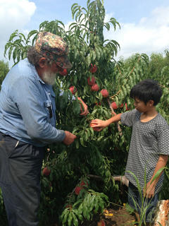Aito Mitsuhashi from Hokuto City, Japan, visited Apple Fegenbush while spending time in Bardstown. He was here as part of the Japanese Homestay program in Madison County. He is 13 years old.