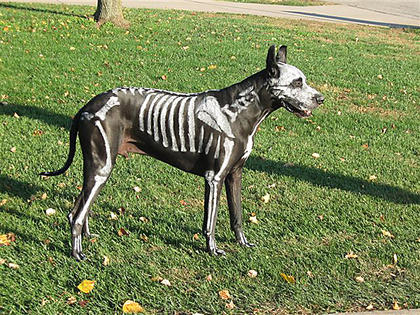 Alexander the Great Dane comes to Bardstown to greet trick-or-treaters as a skeleton. Once the kids see him they forget all about getting candy, his owners say. Alexander lives with Rick and Michelle Asay, Taylorsville.