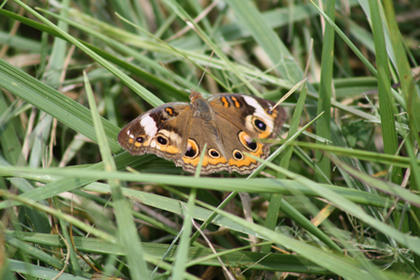 Annette W. Cecil, Bardstown, photographed this butterfly at her parents' home during a fishing trip.