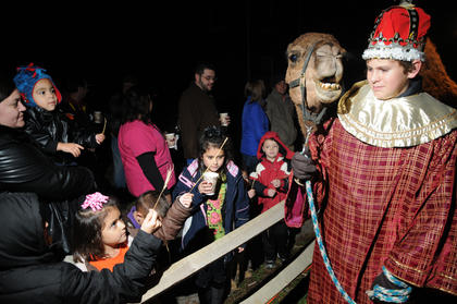 William Hahn leads a camel owned by Magistrate Jerry Hahn at the living nativity at Bardstown Baptist Church Friday. Children try to feed hay to the skittish animal.