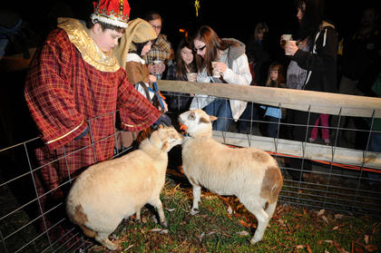Daniel Milby tends to sheep at the living Nativity at Bardstown Baptist Church Friday.