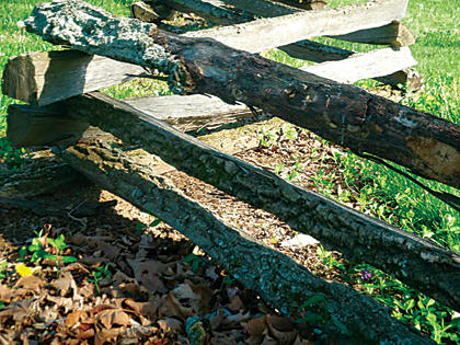 """Stump loved the """"rustic feel"""" of this natural fence when she took the photo at Bernheim Forest in the spring of 2010."""