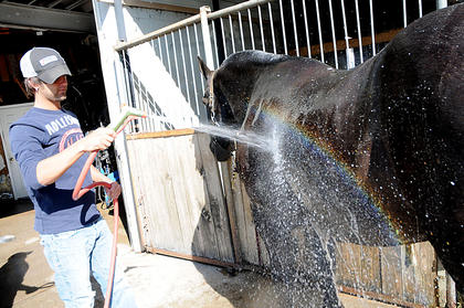 """Brandon Biven, Bardstown, washes """"Matt,"""" a 20-year-old Percheron draft horse at Around the Town Carriage Tuesday. Biven is Jones' stepson."""