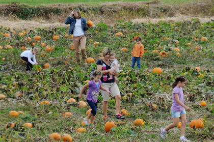 Children and their parents hunt for the perfect pumpkin at Watson's Pumpkin Festival at Watson's Pumpkin Patch near Bloomfield Sunday.