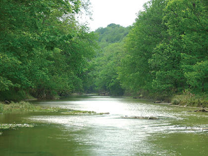 """Autumn Stump took this photo of a stream that runs along Deatsville and Lenore Road in Cox's Creek in the spring of 2010. It was one of first places her husband took her to when they visited Kentucky. Originally from Pennsylvania, Stump has lived in Nelson County for the  last seven years. She and her husband have a 12-year-old daughter. Stump, a waitress at the Huddle House in Bardstown, is a big nature lover. She believes that's from where her love of photography generates. She received a digital camera as a present and has, since then, been capturing images across the county and at at Bernheim Forest. """"I love being able to go back and see the images over and over again,"""" she said."""