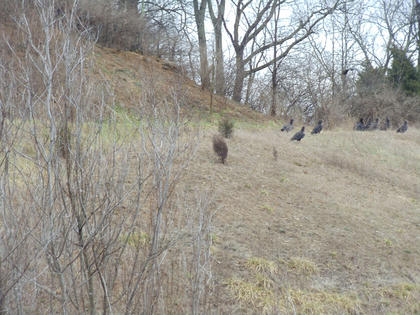Dakota Hagan, Balltown, saw a group of 40 birds, which appeared to be black vultures, on the side of New Haven Road, just north of the Blue Grass Parkway, about 2:45 p.m. Feb. 29.